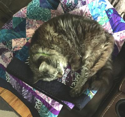 Cat sleeping on a bereament quilt