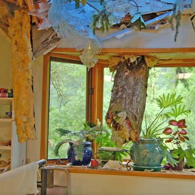 Tree Limb Jutting thru Ceiling